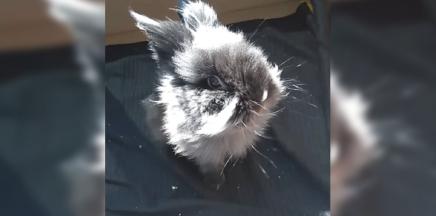 Pets of FHCI:Benny