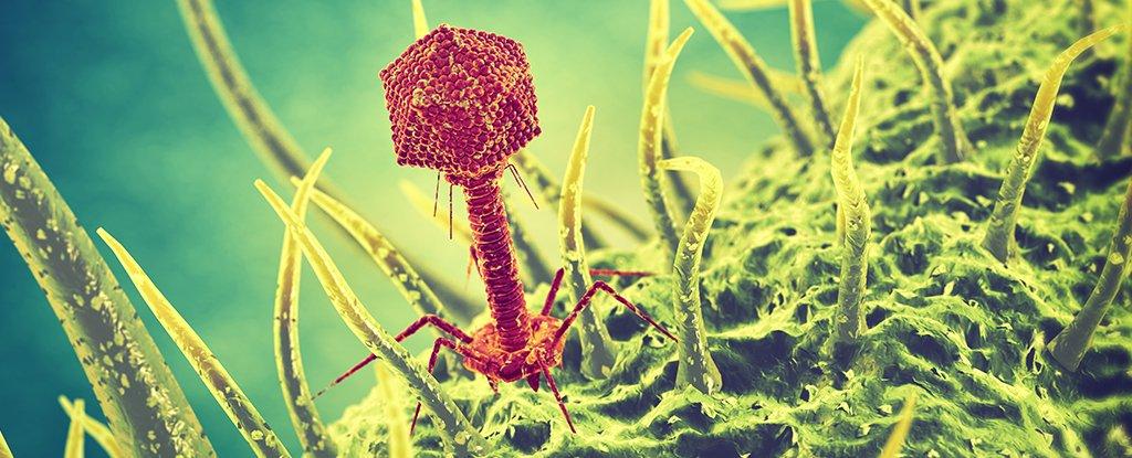phage_1024