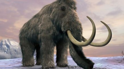 Rise Of The Dead: Woolly Mammoth Revival
